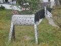 Pferdefreuden